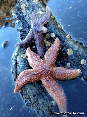 Canvas Photo  - 8 x 10 Starfish Buddies