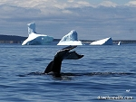 Canvas Photo - 8 x 10 - Whale Gives A Hello