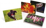 Box - Assorted 12 pack cards