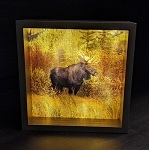 Bull Moose Light Box - Brown Frame