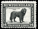 Canvas Print - Vintage Newfoundland Stamp - 11 x 14 - Newfoundland  Dog