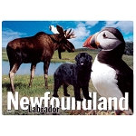 Magnet - Newfoundland and Labrador Puffin, Moose & Newfoundland Dog Image
