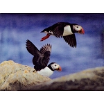Puffin Canvas Sign 11
