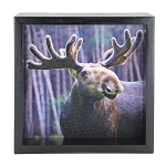 Young Moose Window Box - Black Frame