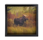 Bull Moose Window Box - Black Frame