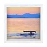Whale Tail Window Box - White Frame